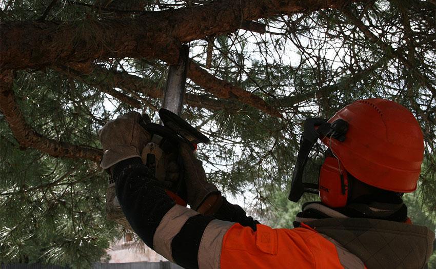 El próximo día 10 finaliza el servicio especial de recogida de restos de podas y talas por el temporal Filomena