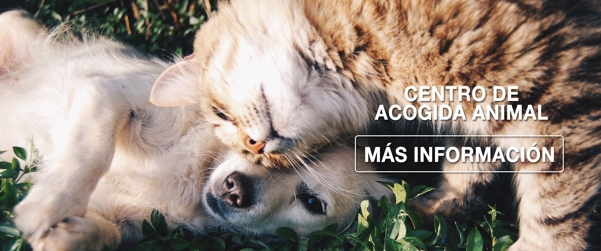 slide-acogida-animal